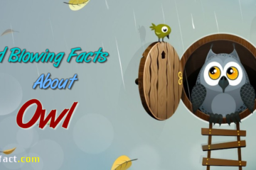 Interesting Facts About Owl