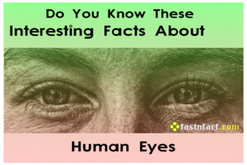 Interesting Facts About Human Eyes